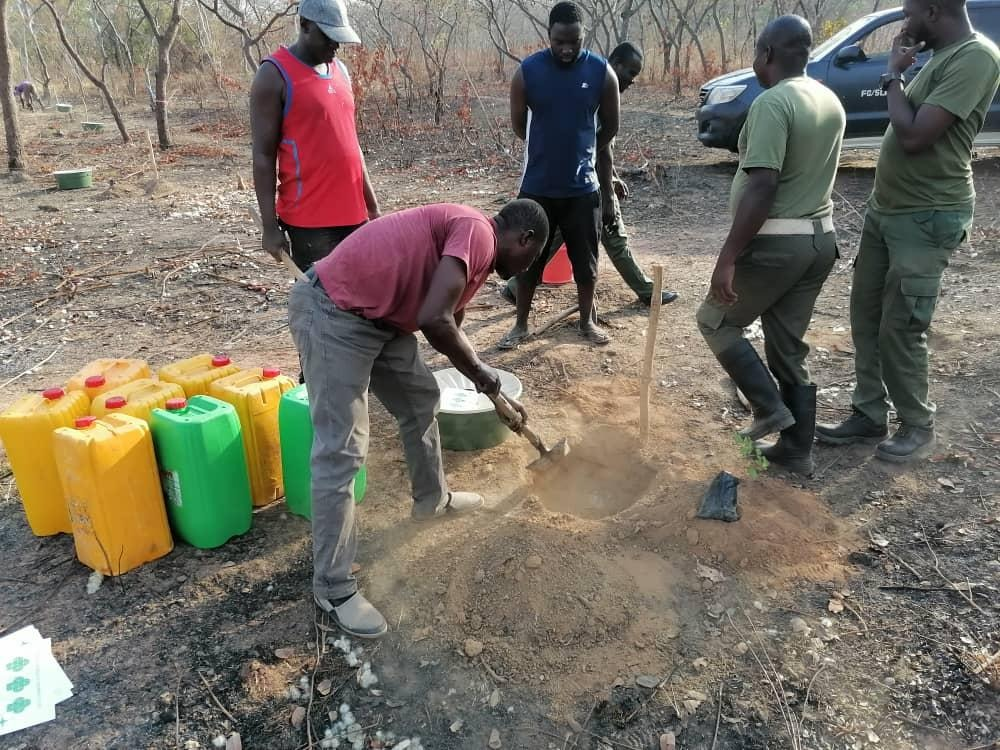 Aufforstung Afrika Rosenholz Plantage entsteht