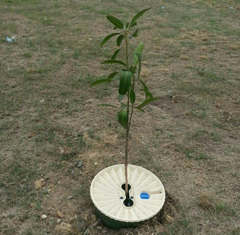 Aufforstung Afrika waterboxx mit saemling